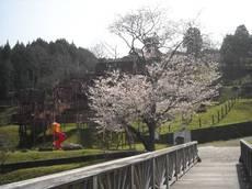 Sakurabasi003