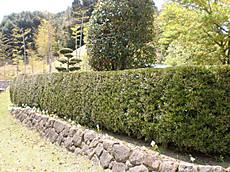 Kimidori002